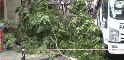 Fatih'te ağaç devrildi faciadan dönüldü