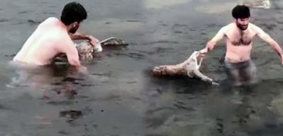 Fatsa'da buz gibi suya dalıp çıkardı! 'Görünce şoka uğradım'