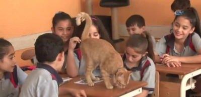 Fenomen kedi Tombi'nin dersleri 'Pekiyi'