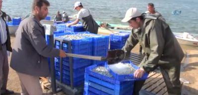 Gümüş balığı, Türkiye'de rağbet görmüyor, Avrupa'da yok satıyor