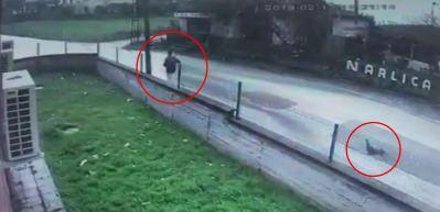 Horozla çocuğun bitmeyen kovalamacası kamerada