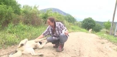İki dil bilen ''Nişantaşı kızı'' köyde keçi güdüyor