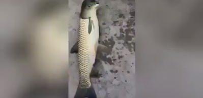 İlginç başlı balık sosyal medyayı salladı