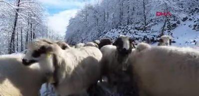 Karadeniz yaylalarında kar manzaraları