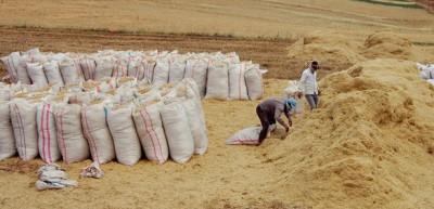 Çiftçilerin Ramazan mesaisi zorlu geçiyor
