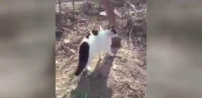 Kedi çetesinden akılalmaz saldırı