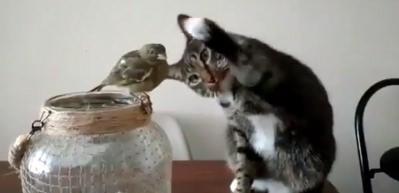 Kedi ile kuşun inanılmaz dostluğu
