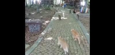 Kediler Mozart'ı duyunca yemeğe koşuyor