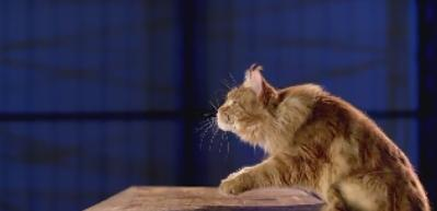 Kedinin ağır çekimde kusursuz atlayışı
