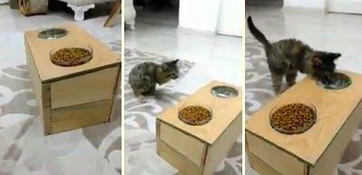 Kedisi için yaptı, anlatırken böyle duygulandı