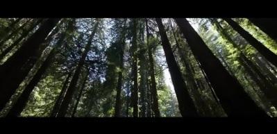 Kiğılı Türkiye'de Ormanların Sesi Oluyor