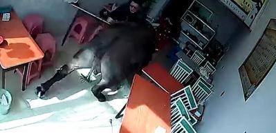 Kırmızı elbiseli kadını gören bufalo böyle saldırdı