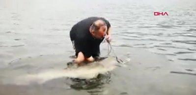 Kızılırmak'ta yakalandı! 1.85 metre boyunda ve 97 kilogram ağırlığında