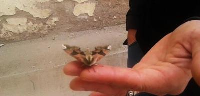 Komando kamuflajlı kelebek görenleri şaşırttı