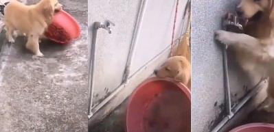 Köpeğin inanılmaz zekası! Yaptığına bakın..