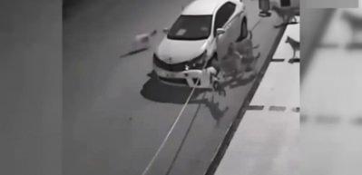 Köpekler otomobili böyle parçaladı