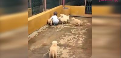 Küçük çocuğu hunharca seven yavru köpekler