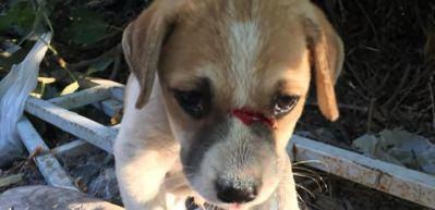 Kuşadası'nda odunla köpeği döverek tanınmaz hale getirdi!