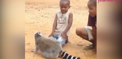 Lemur'un istekleri güldürdü!