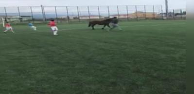 Maç oynanırken sahaya at girdi