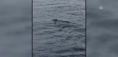 Marmaris'te tatilciler yüzeye yakın köpek balığı görüntüledi