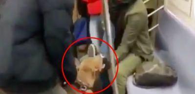 Metroda dehşet anları! Pitbull kadına böyle saldırdı