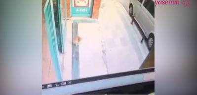 Müşterilere saldıran kedi trend oldu