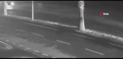 Palmiye ağacı otomobili hurdaya çevirdi