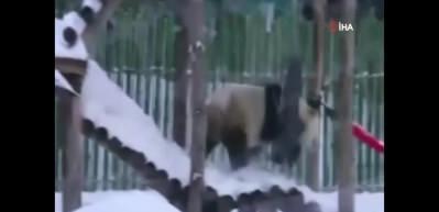 Pandalardan kar keyfi