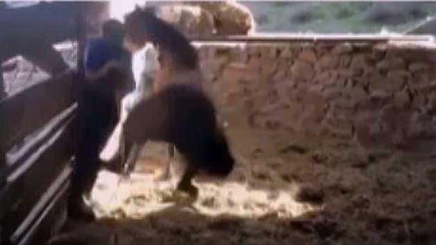 Atın gazabına uğradı, ölümden döndü