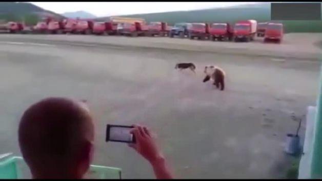 Boyundan büyük ayıya kafa tuttu ama...