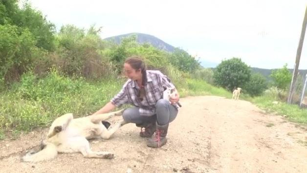 """İki dil bilen """"Nişantaşı kızı"""" köyde keçi güdüyor"""