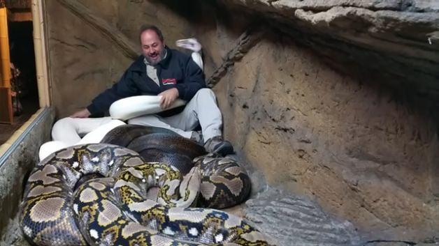 İzlemek bile yürek ister: Dev yılan böyle ısırdı!