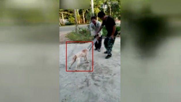 Köpeği kurtarmak için dakikalarca uğraştılar