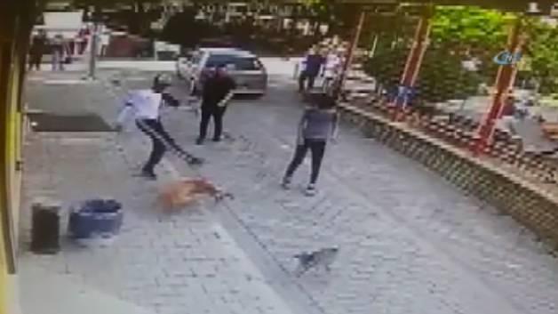 Pitbull dehşeti! Kediye saldırdı