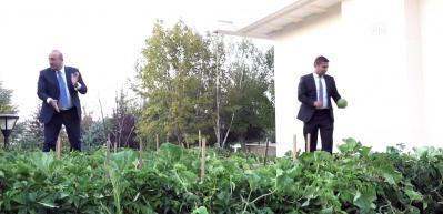 Resmi konutun bahçesinde yetiştirdi, gazetecilere ikram etti