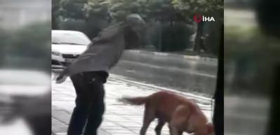 Sağanak yağmurda ağaca bağlı köpeği böyle yumrukladı