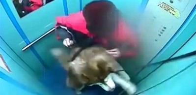 Tasması asansör kapısına sıkışan zavallı köpek...