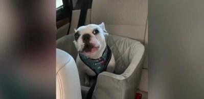 Şarkı söyleyen köpeğin yeni videosu