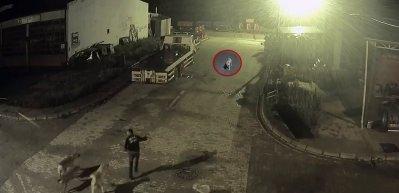 Şehir merkezine inen kurdu, bekçi ve köpekler kovaladı