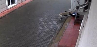 Sokak köpekleri ilkokul öğrencisine böyle saldırdı