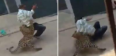 Sokak ortasında leopar dehşeti!