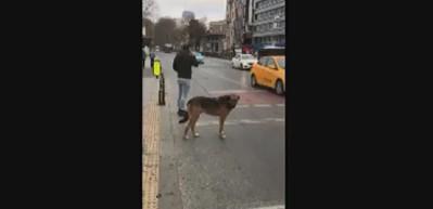 Sosyal medya bu köpeği konuşuyor