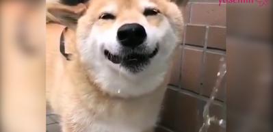 Su içince mutlu olan köpekcik