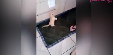 Sütünü yatağında içen yavru kedi