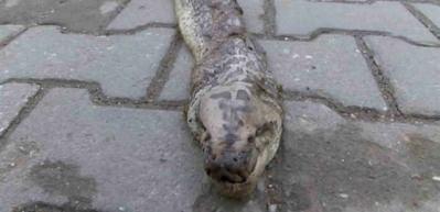 Tekirdağ'da 3 metrelik dev yılan korkuttu!