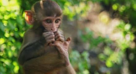 Birbirinden Güzel Hayvan Görüntüleri Video 7