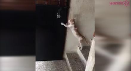 Sahibinin kapısını çalan kedi!