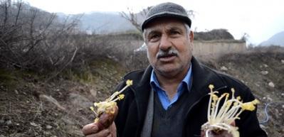 Toprak altında saklanan lezzet: Şalgam