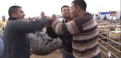 Trakya'daki hayvan pazarlarında yoğunluk